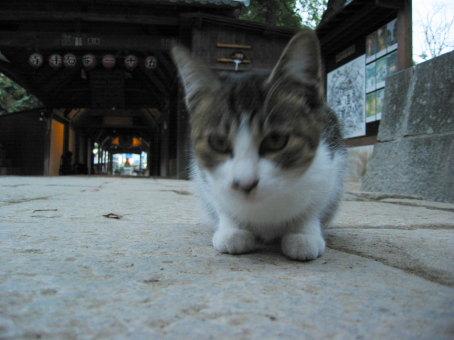 四国霊場51番札所石手寺(愛媛県松山市石手2丁目9-21)にいた猫(拡大写真)