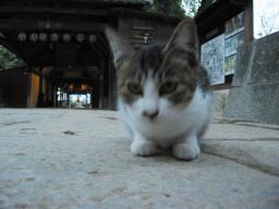 四国霊場51番札所石手寺(愛媛県松山市石手2丁目9-21)にいた猫