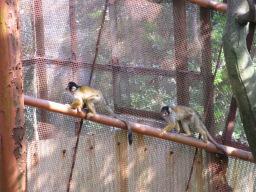 「南レク こども動物園」のかわいらしいリスザル
