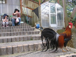 「南レク こども動物園」の鶏